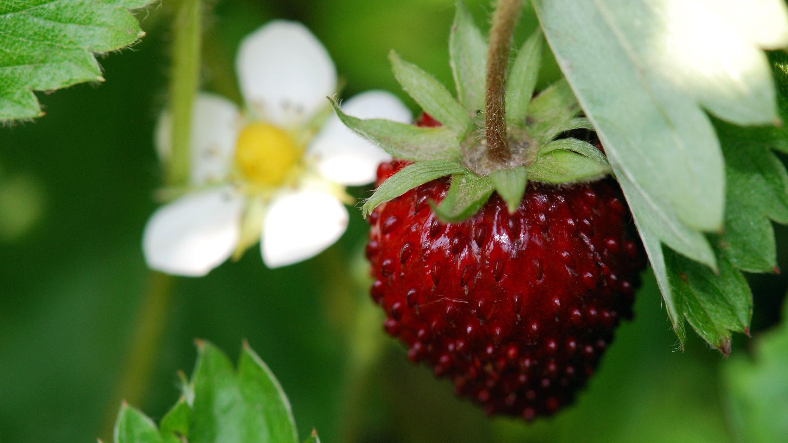 Картинки июньские ягоды