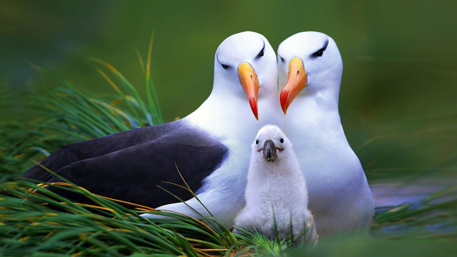 Картинки на весь экран птицы