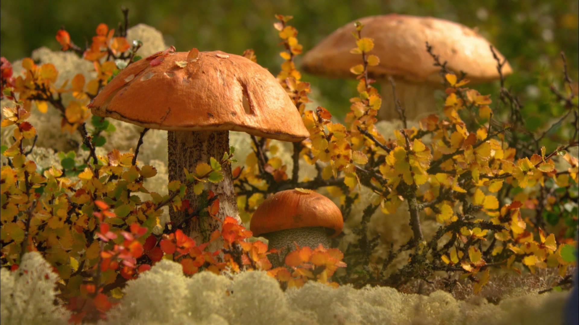 Название всех грибов с реальными фото макияж