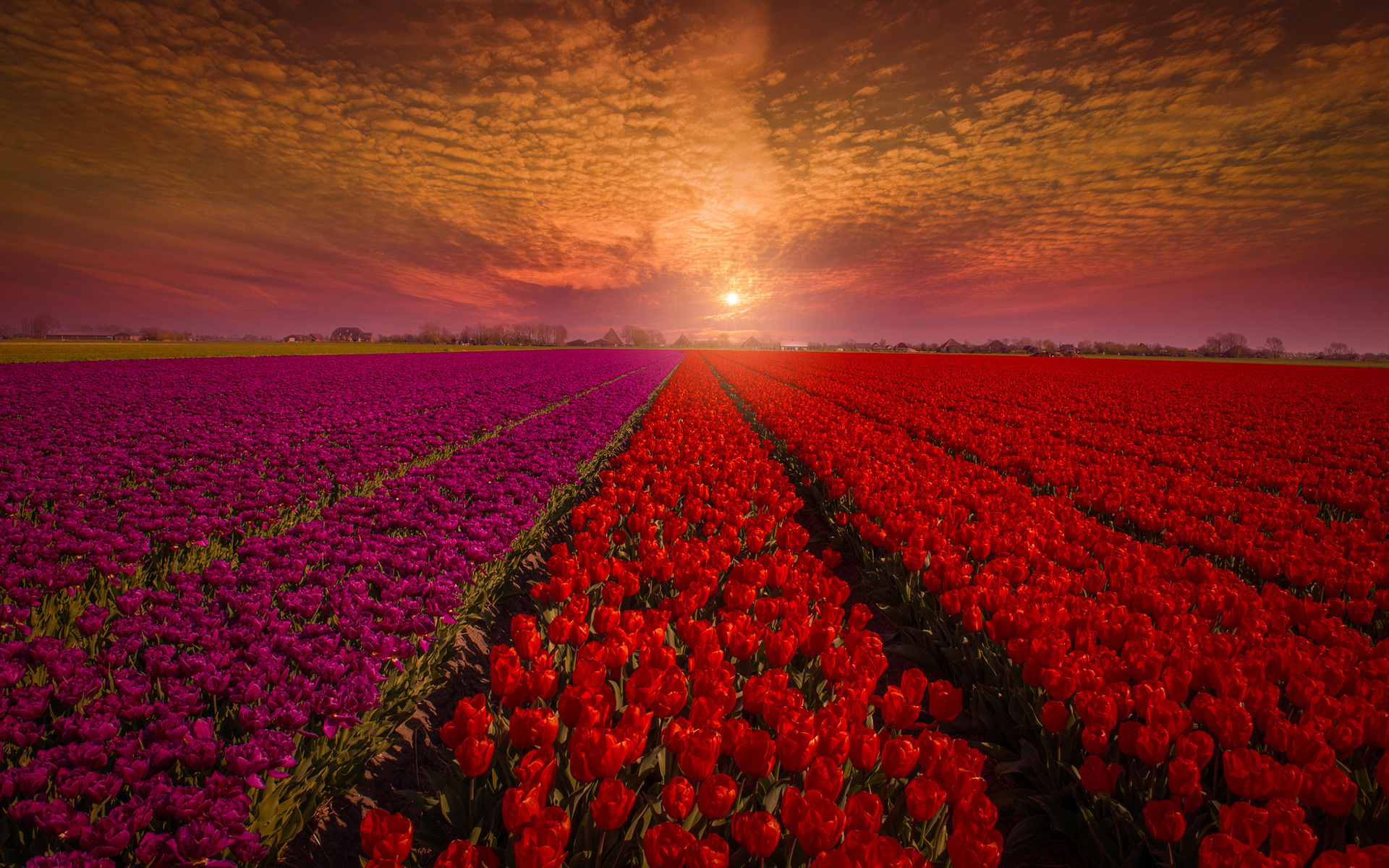 самые красивые картинки поля что
