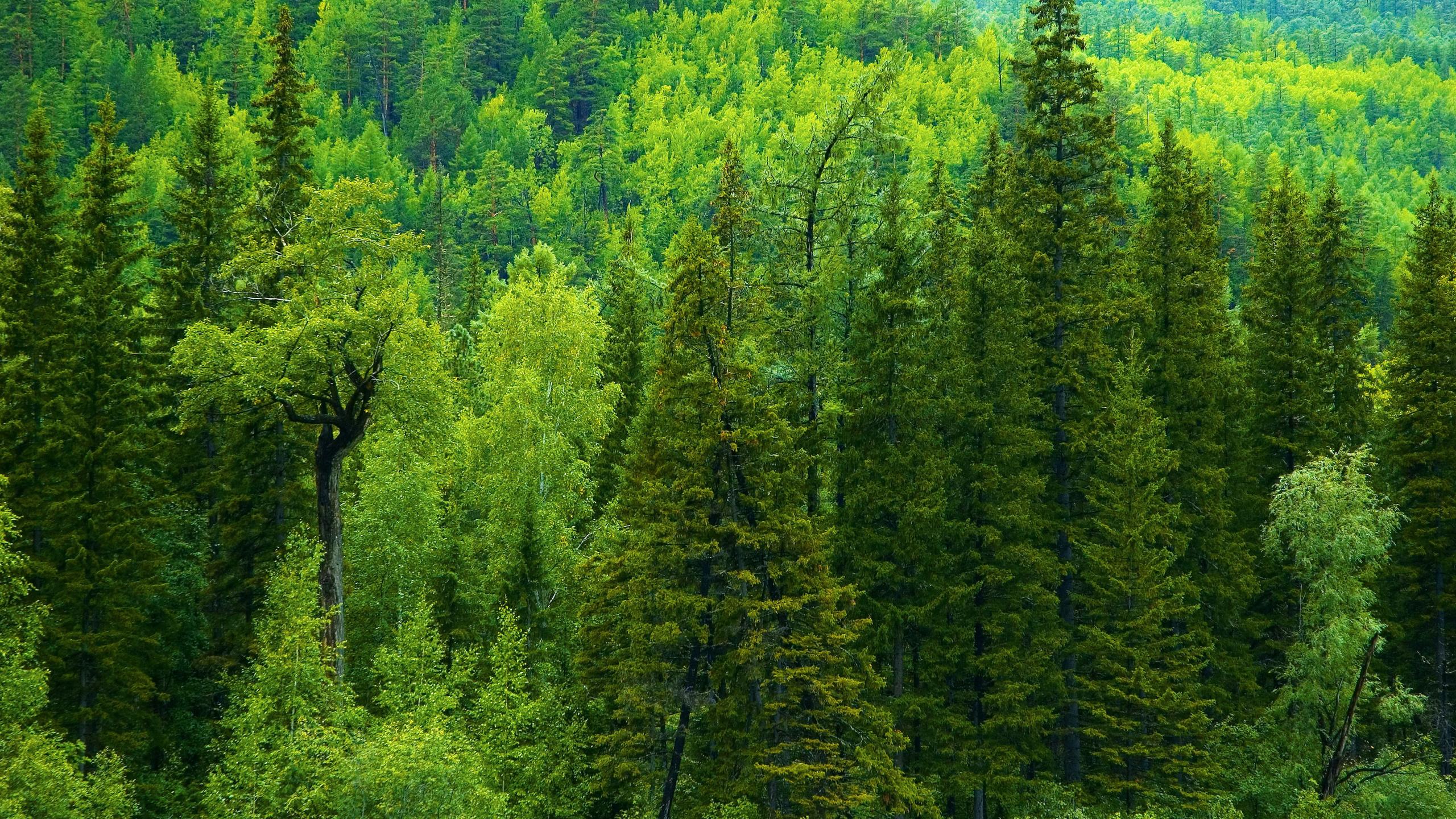 картинки разного леса наверняка захочется оставить