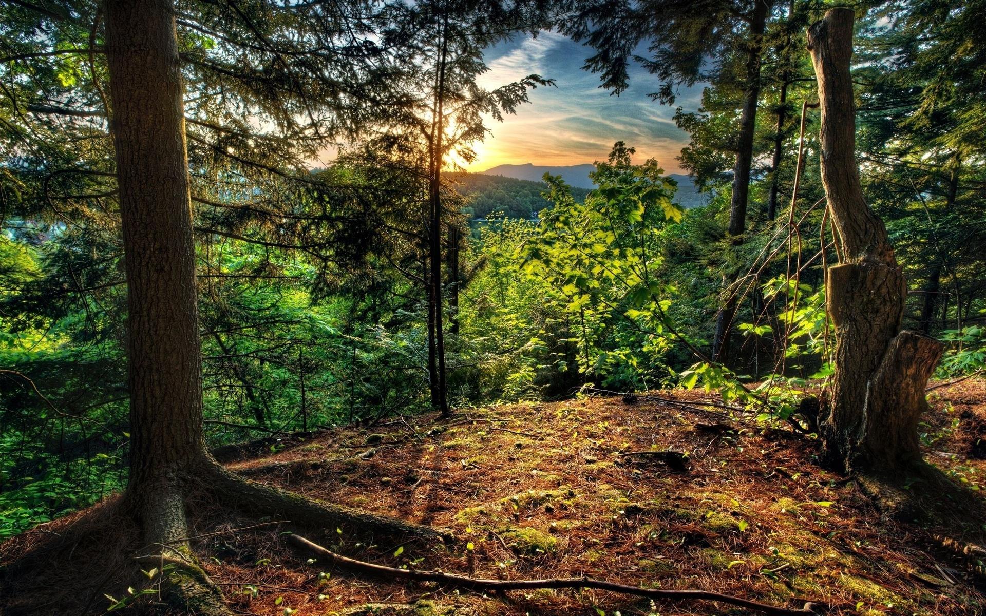 поставив красивая открытка леса проводят