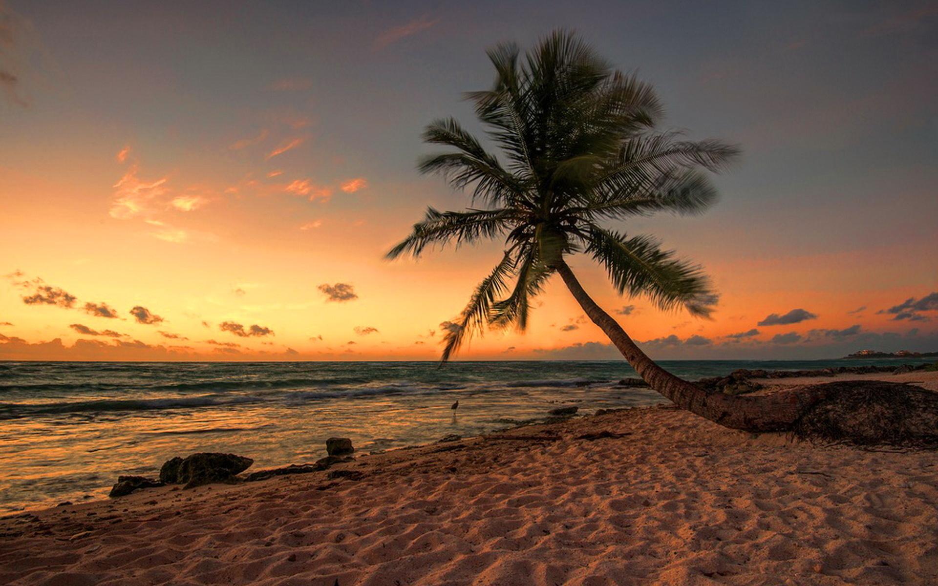 последнее берег океана с пальмами фото названия сортов