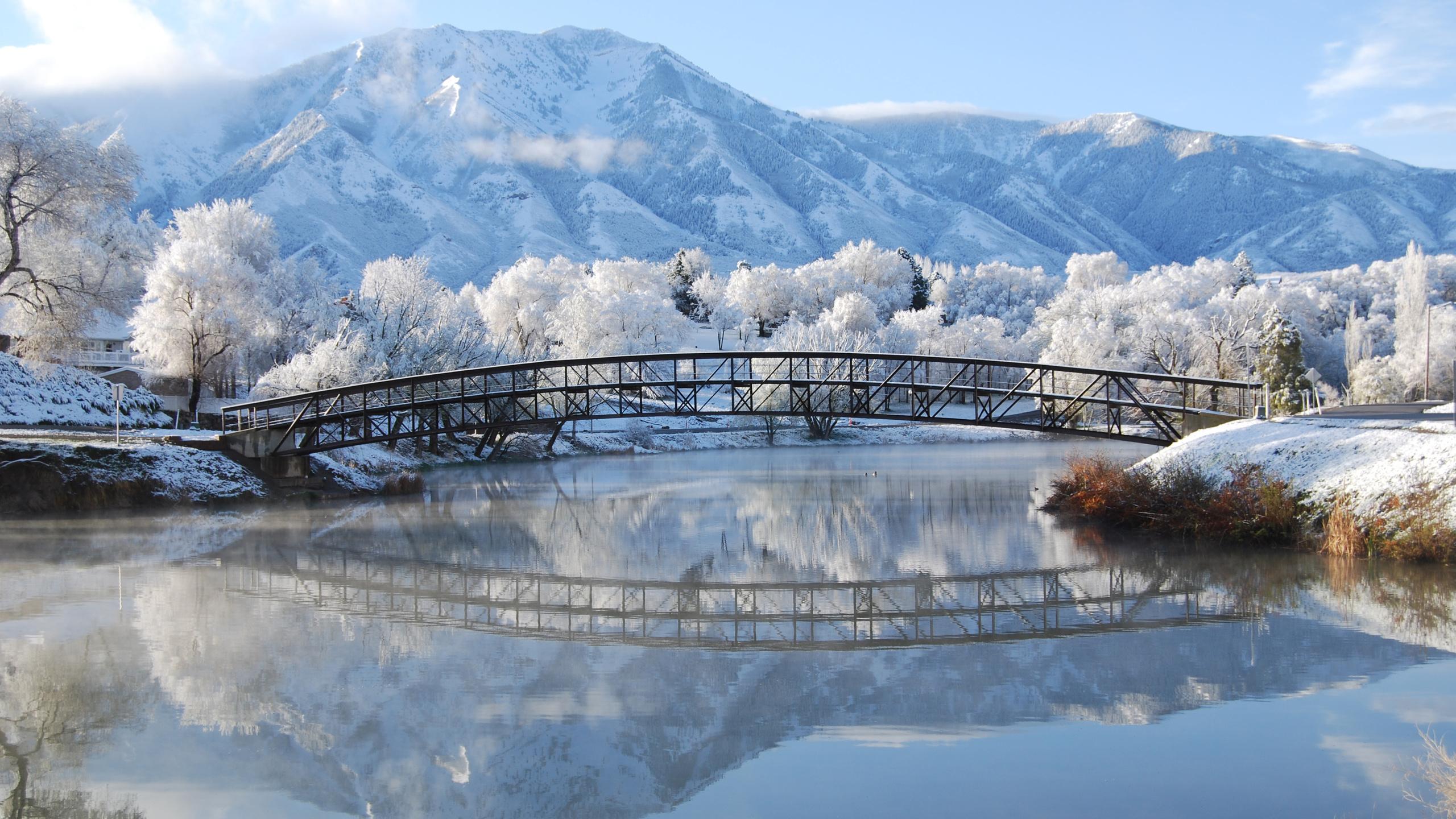определить животное, яркие картинки зима средней школе учебному