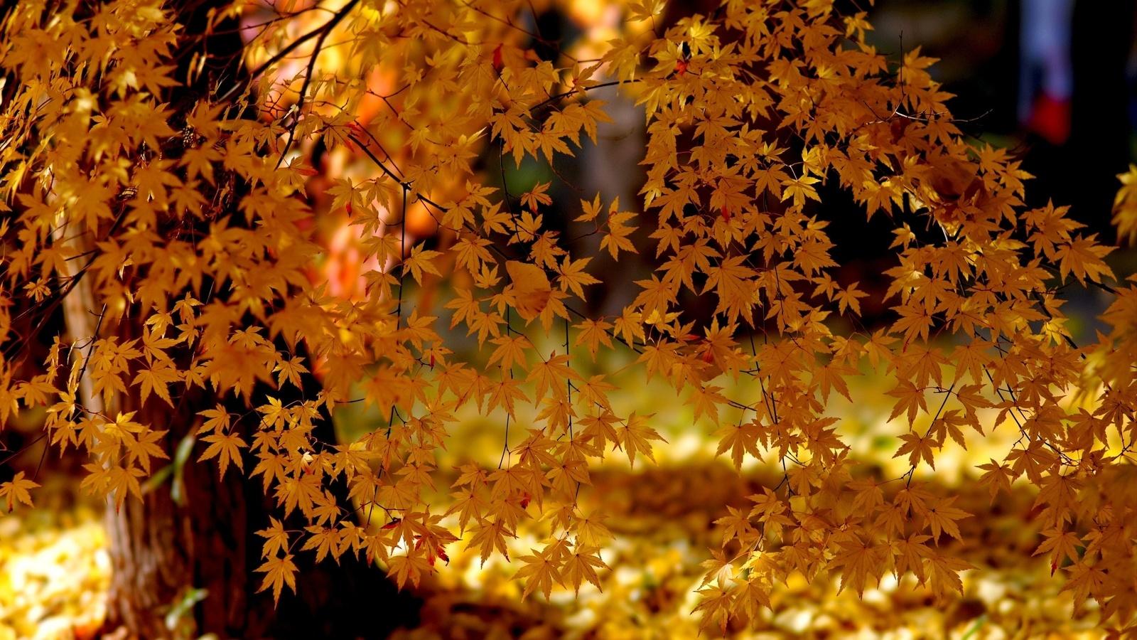 Открытки святитель, все картинки про осень