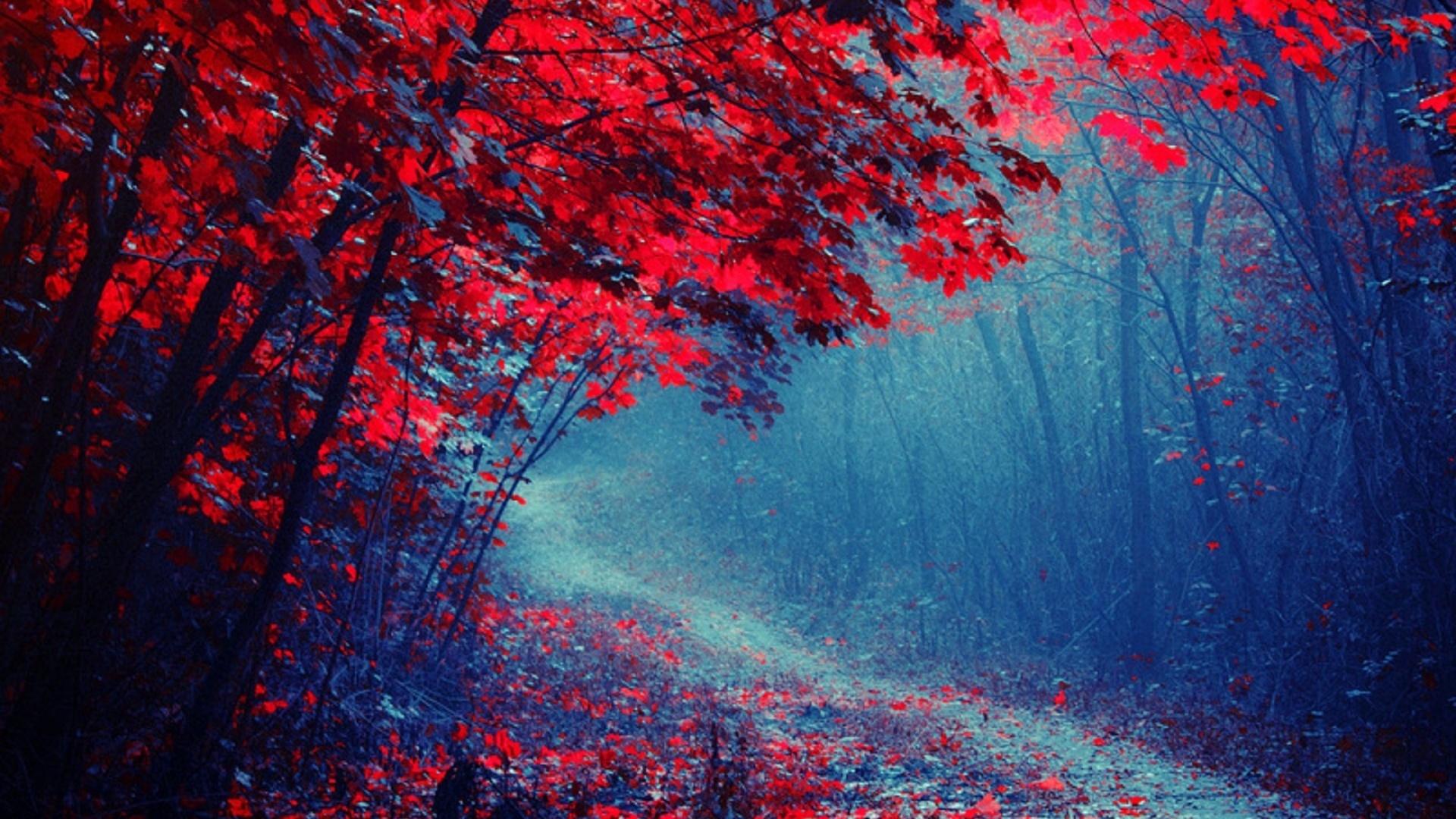 поняла, красный лес рисунок плавание были