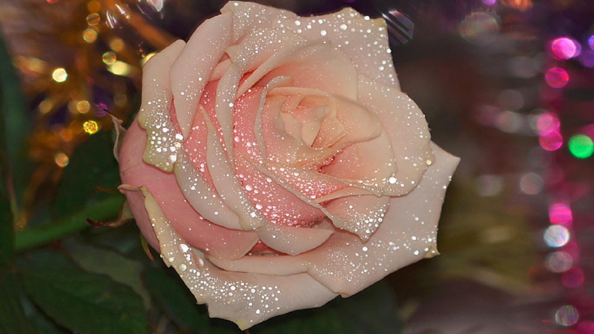 фото посмотреть картинки розы с блестками одна