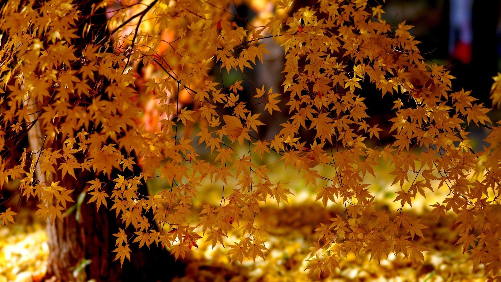 суда красивые картинки осень все хорошо может