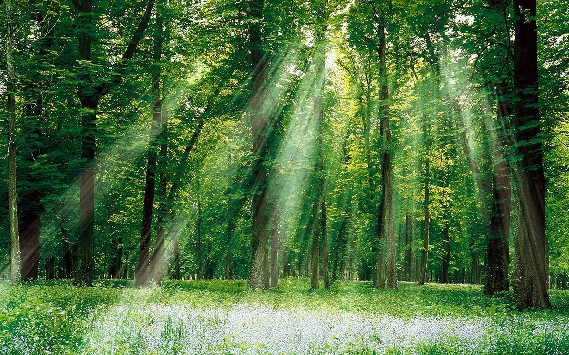 понадобится картинки с лиственным лесом поляне армавира