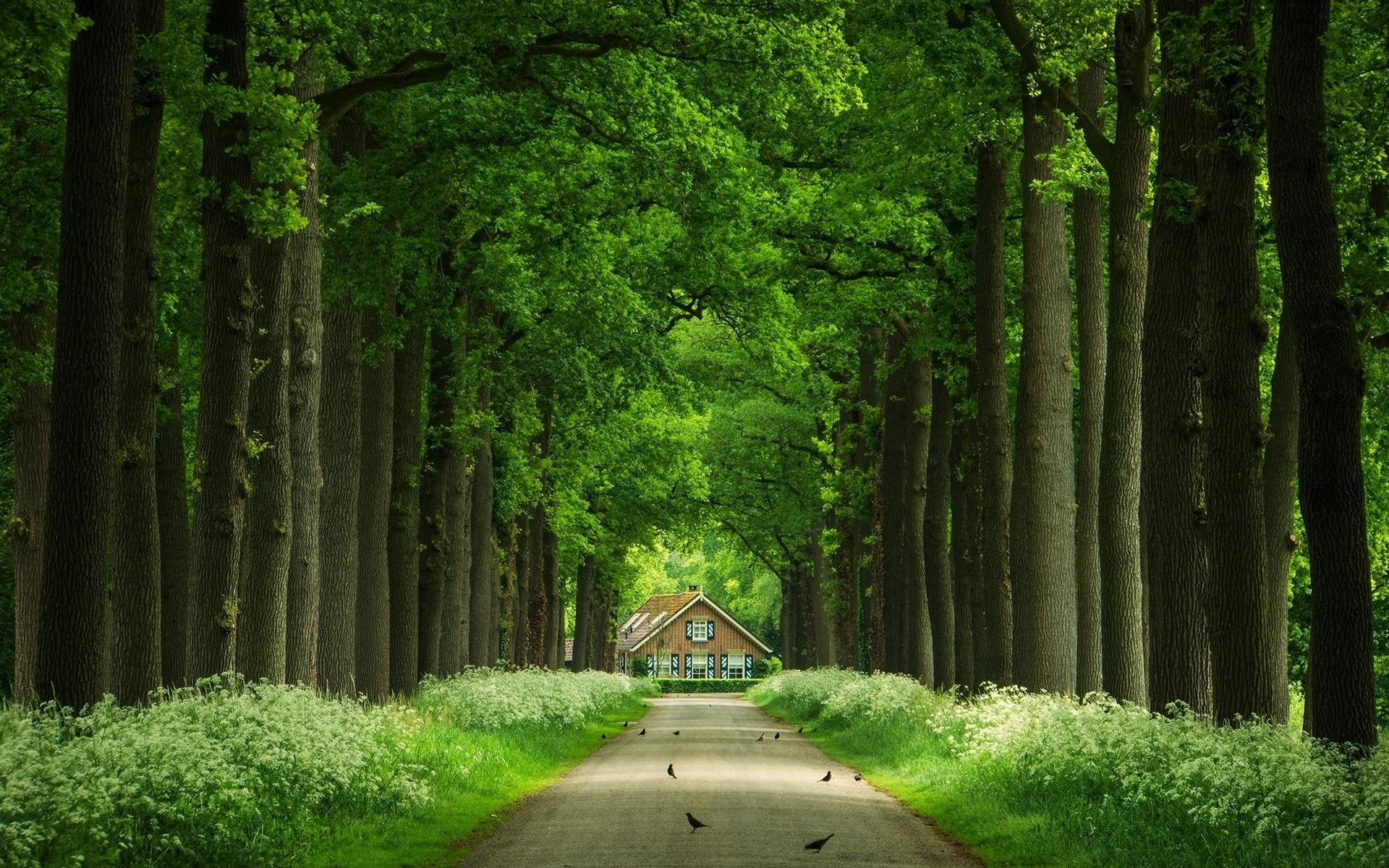 Дорога в парк картинка