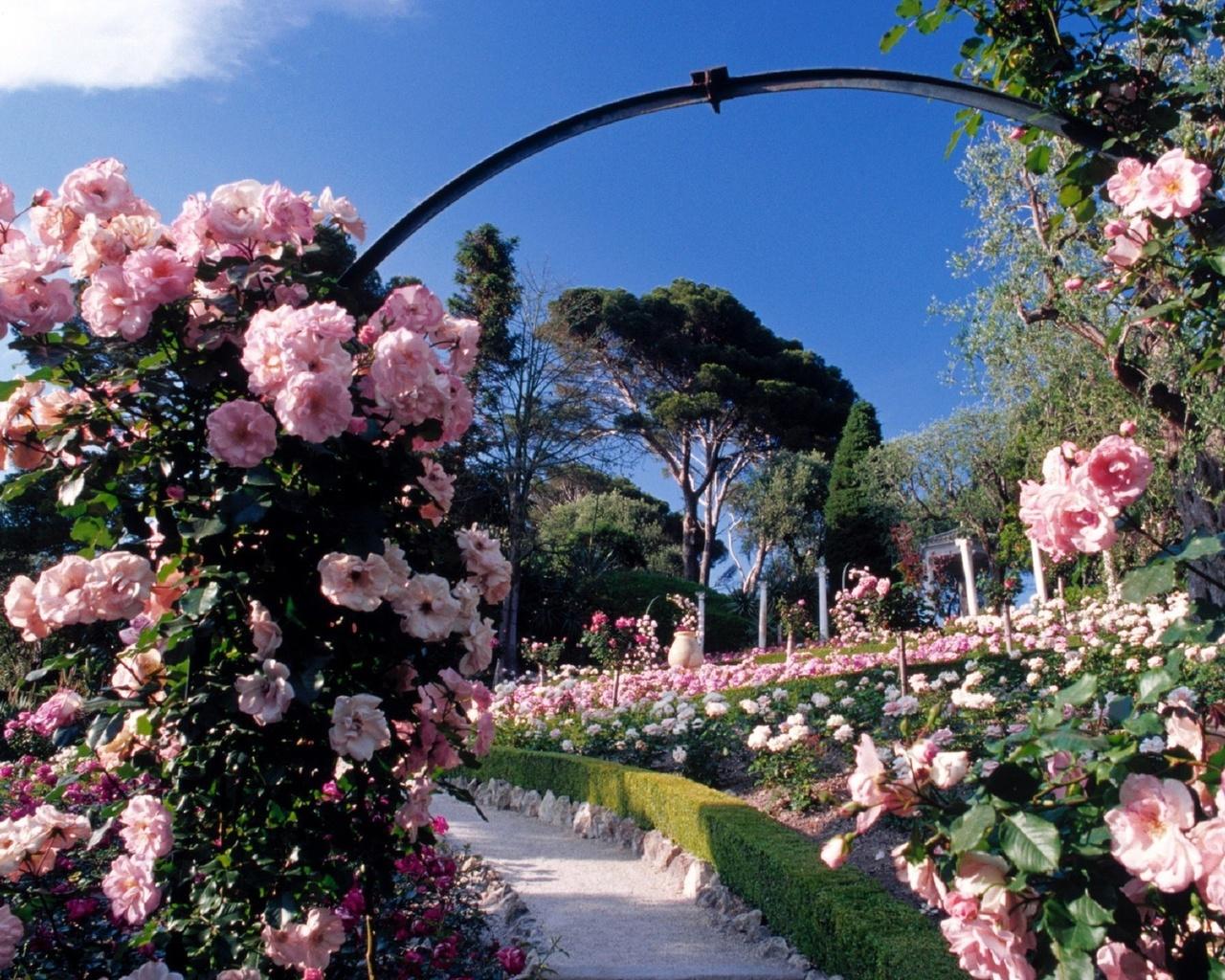 Картинка розовый сад