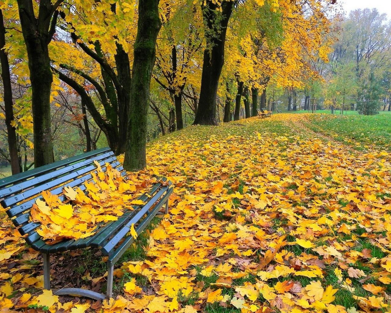 Картинки осенний листопад в парке, пожеланиями для