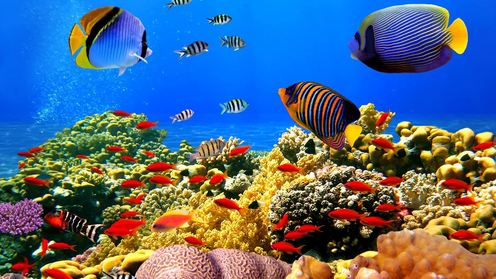 Картинки про морское дно