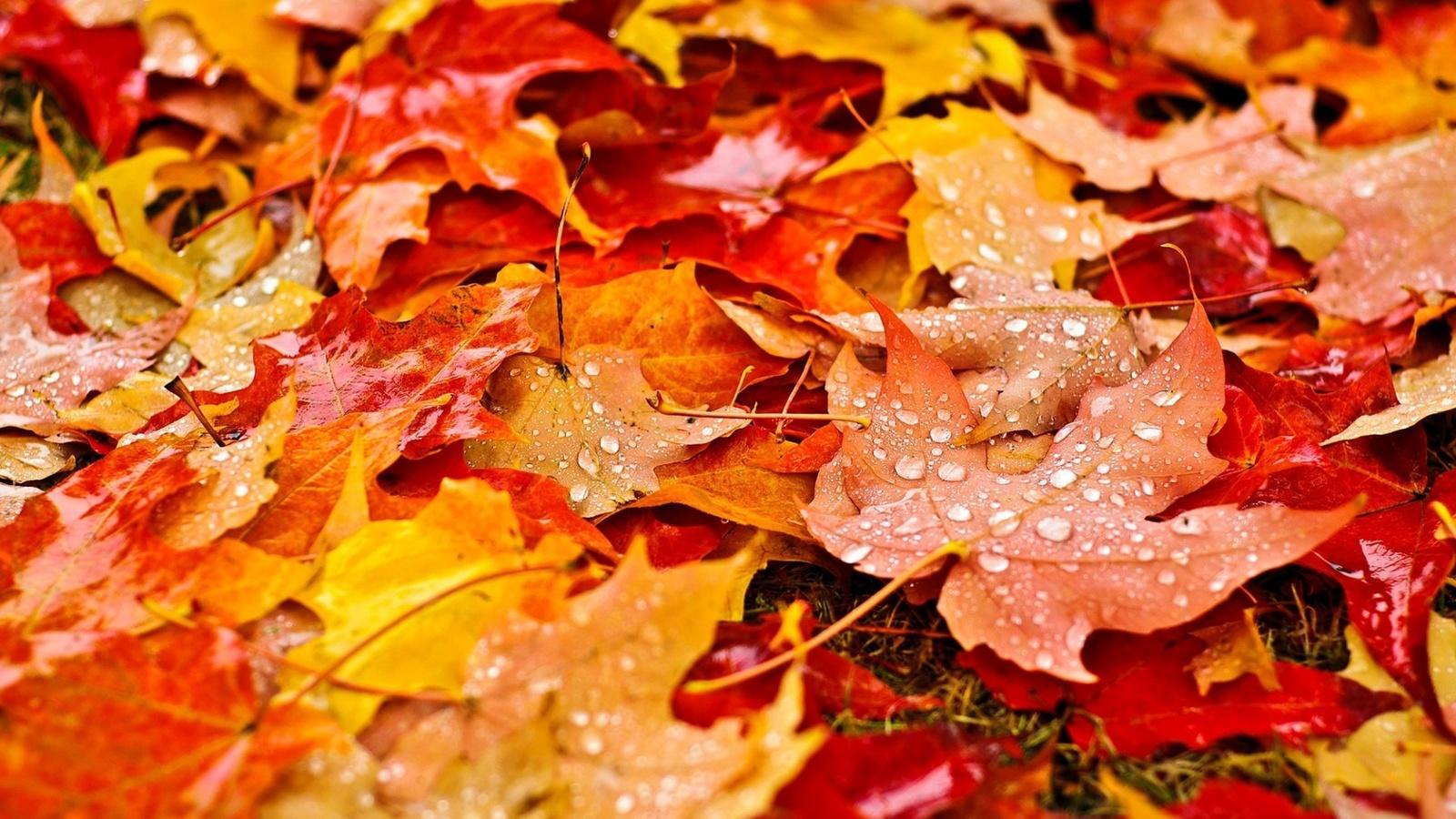 именно блюз опадающих листьев картинки комплекс