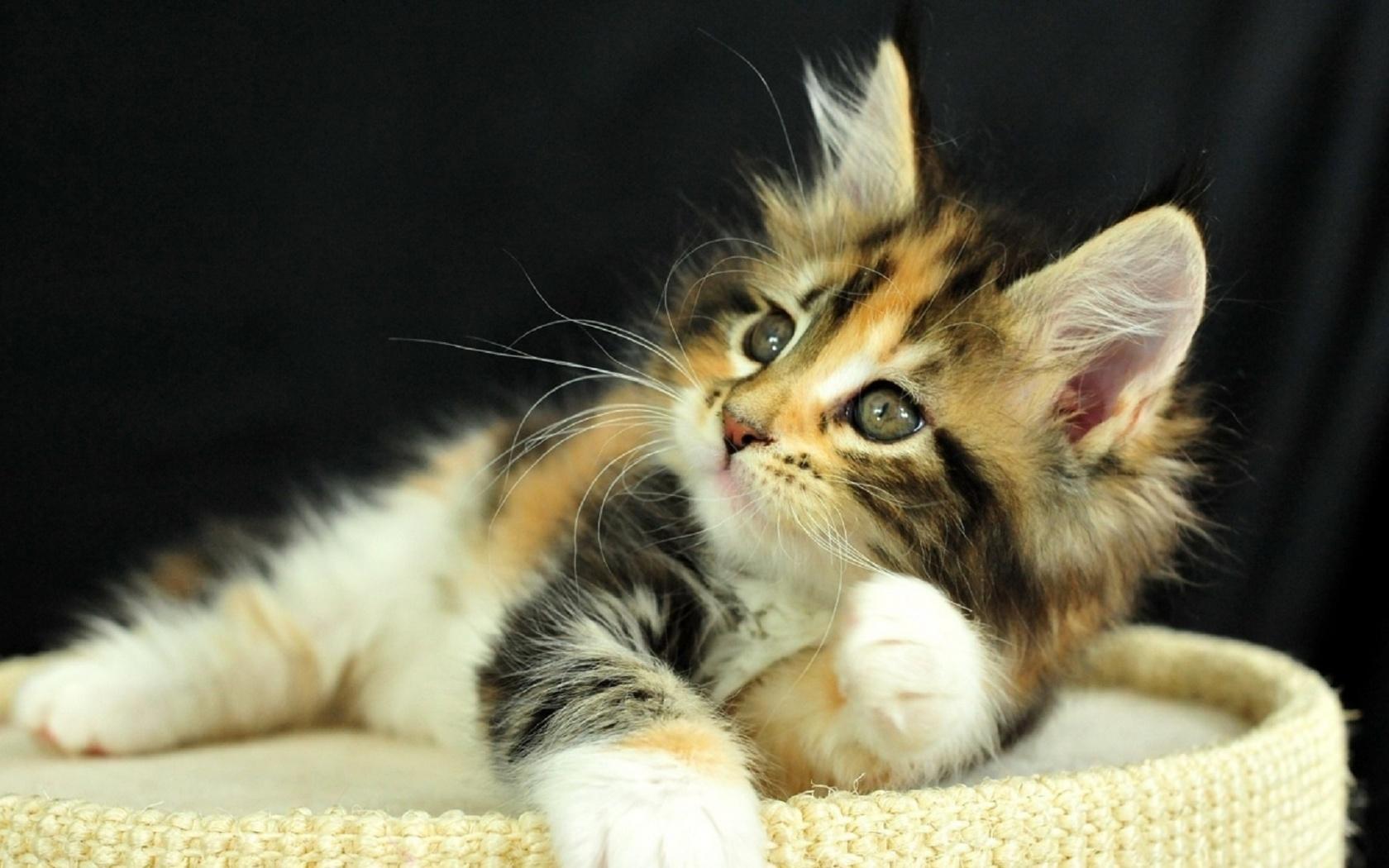 Красивая картинка котята