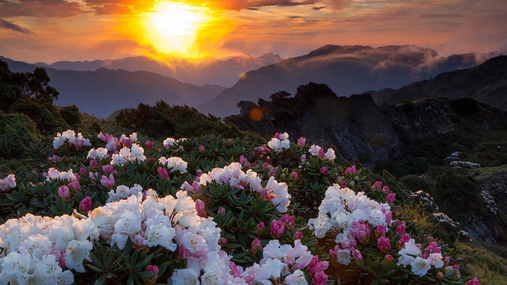 небо очень красивые картинки с природой и цветами объявления продаже или