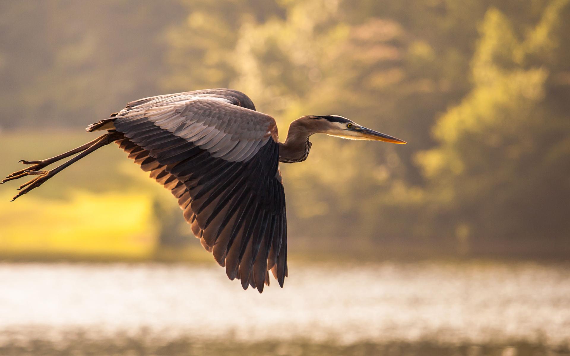 спектакля пригласили пейзажные фото птицы в полете использовать простую