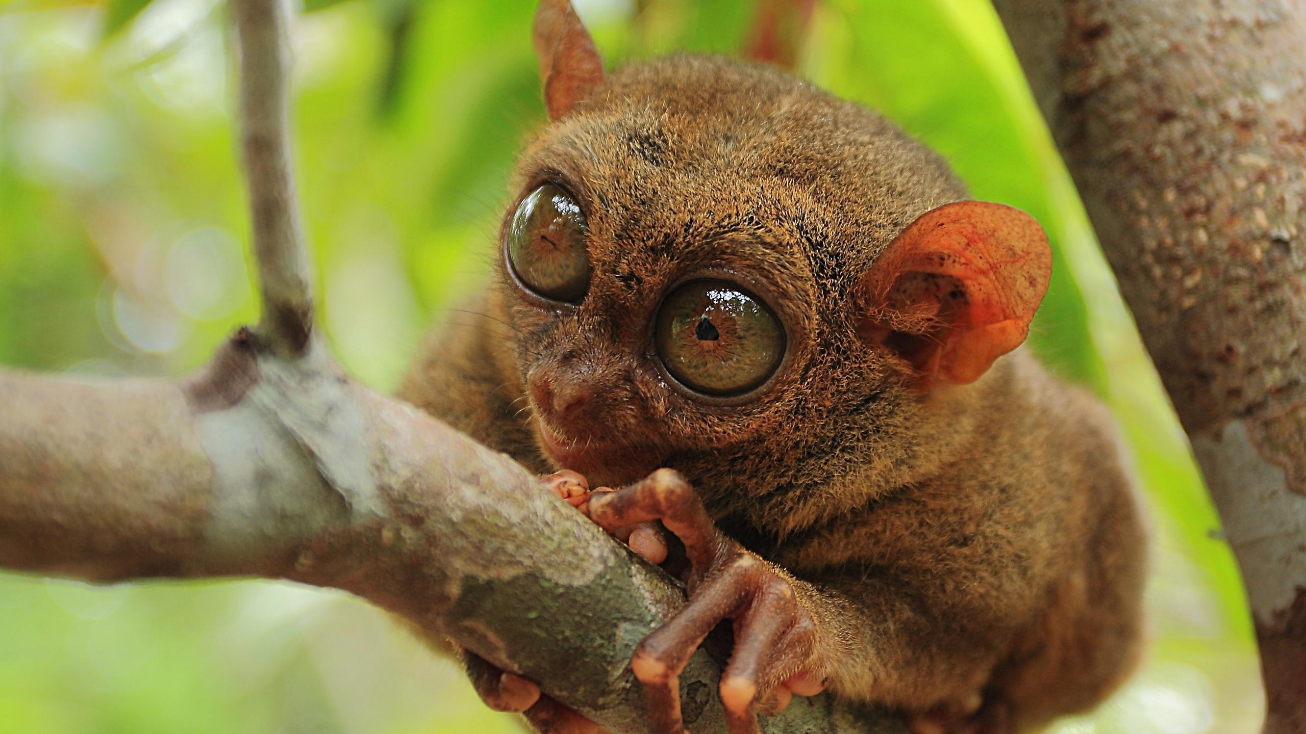 Самые странные животные планеты картинки