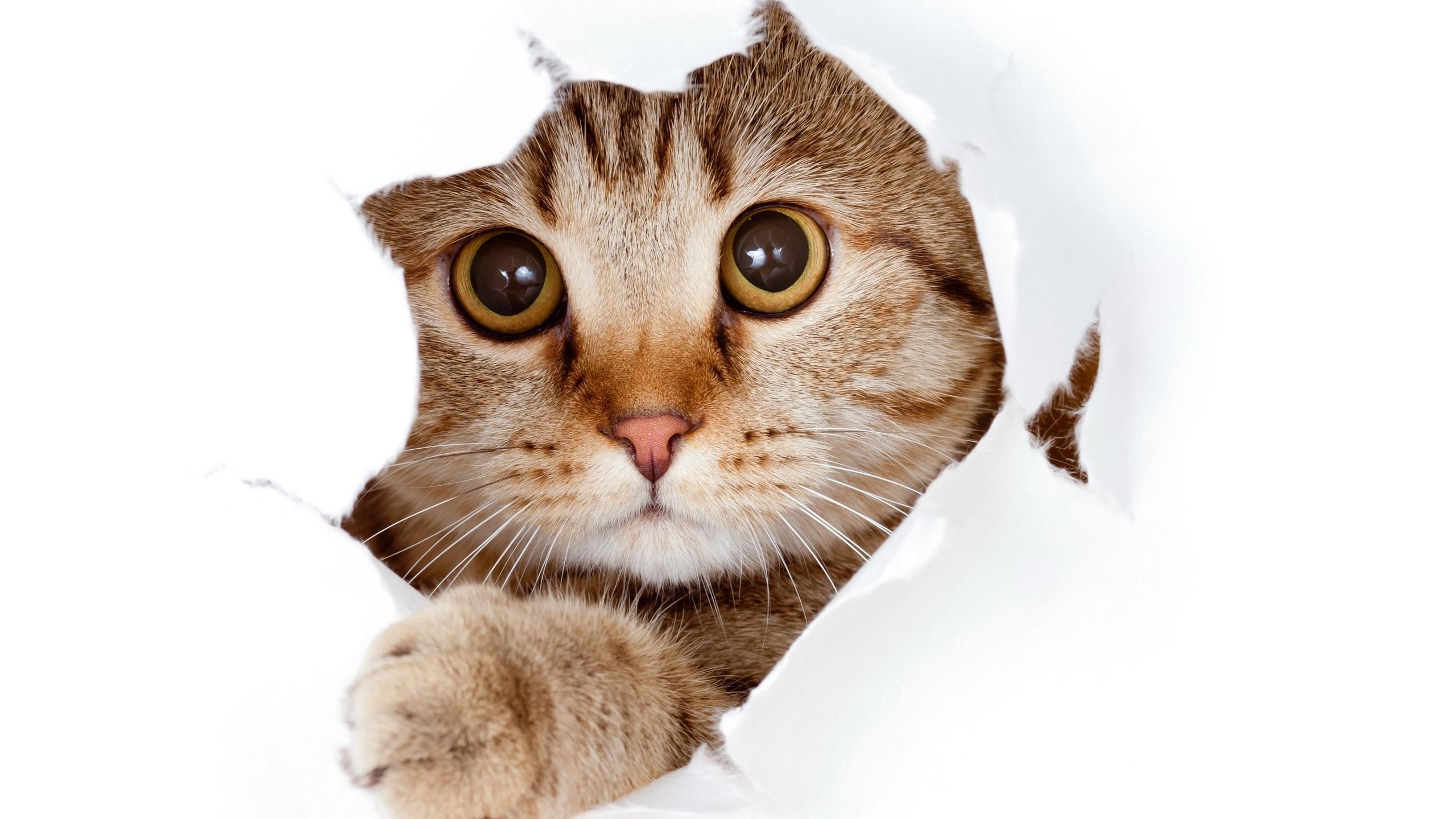 Смешные коты картинки в хорошем качестве