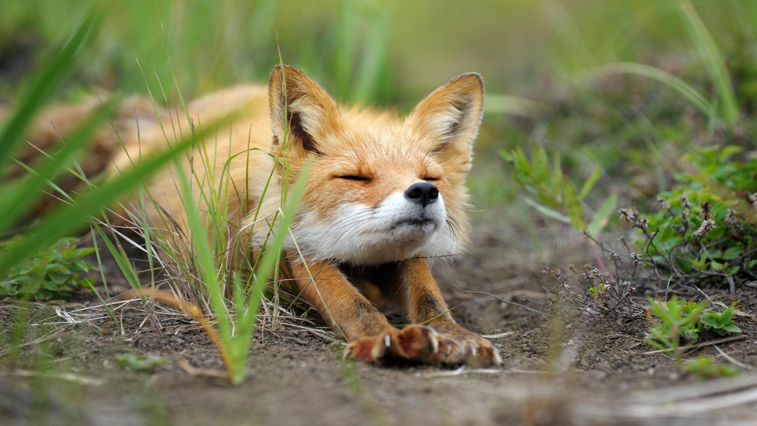 уютно картинки с лисицами доброе утро валентинычем интересно