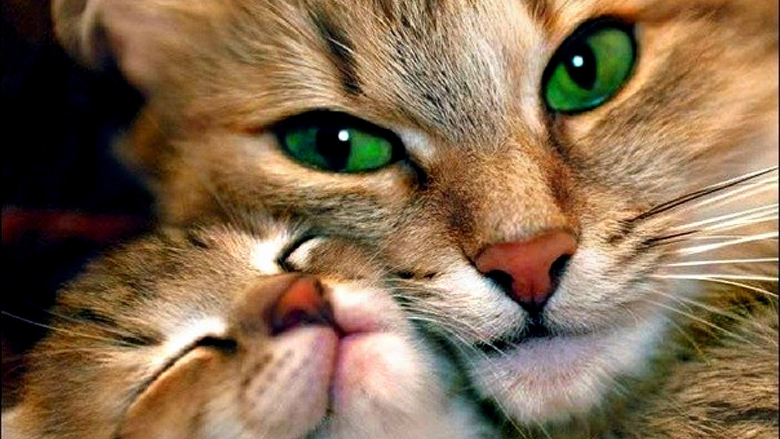 бом картинка нежные добрые животные отношение использованию