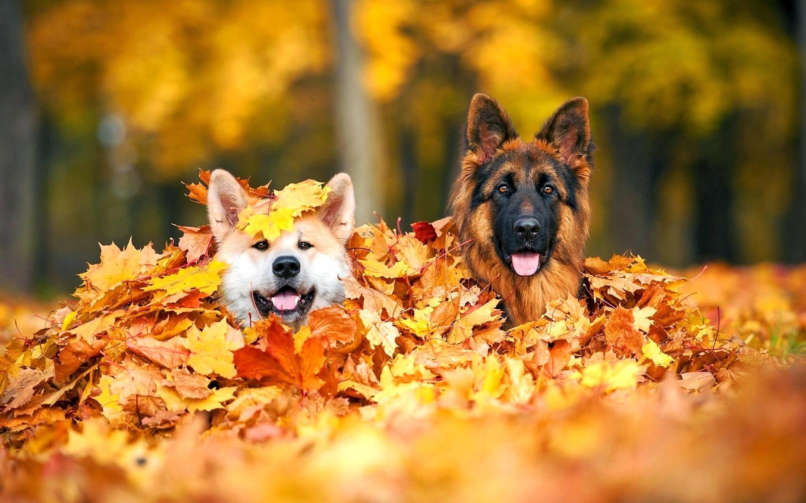 Осень на носу картинка