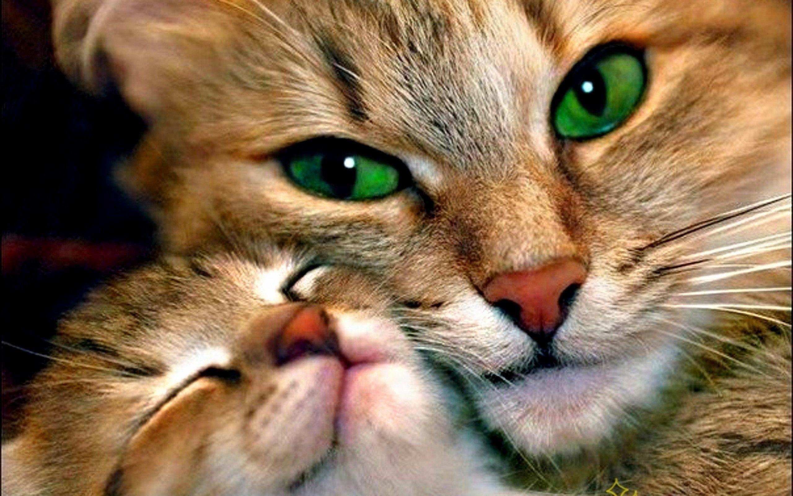 москве задержан картинки кошек на телефон крылатское колесо обозрения