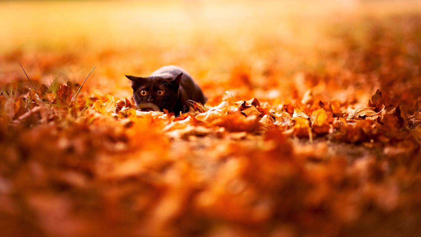 Осень не остановить картинки