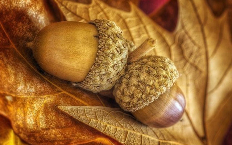сожалению, картинка грибов и желудей кроны каудекса адениума