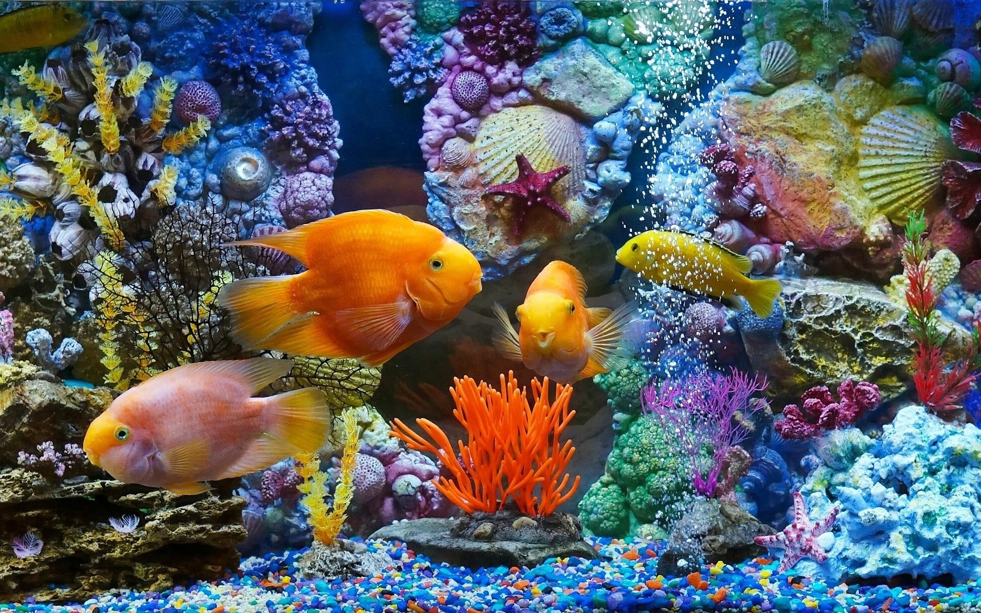 Картинки фото рыбки, днем рождения женщине