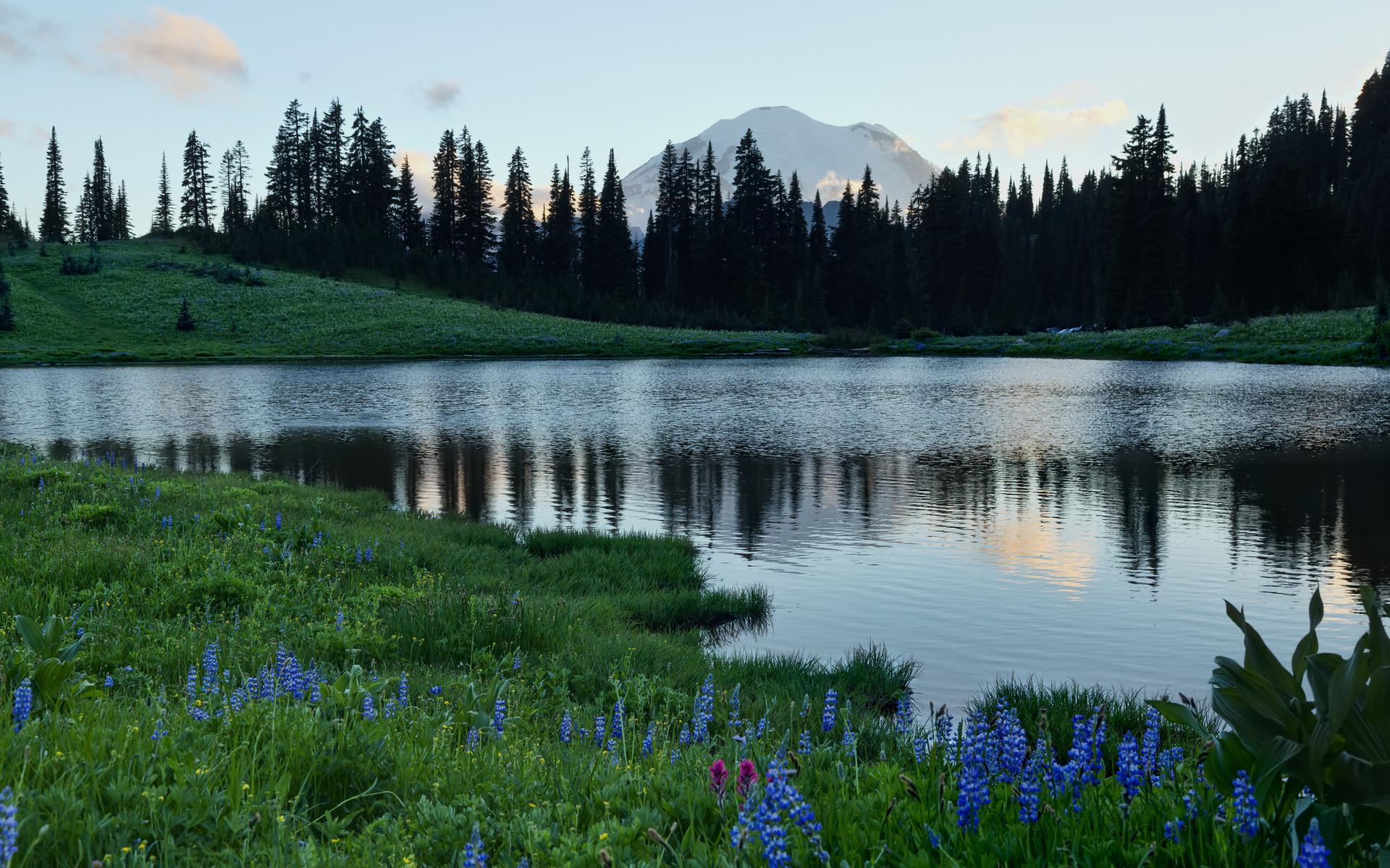 картинка озера с поляной скамейка-диван была