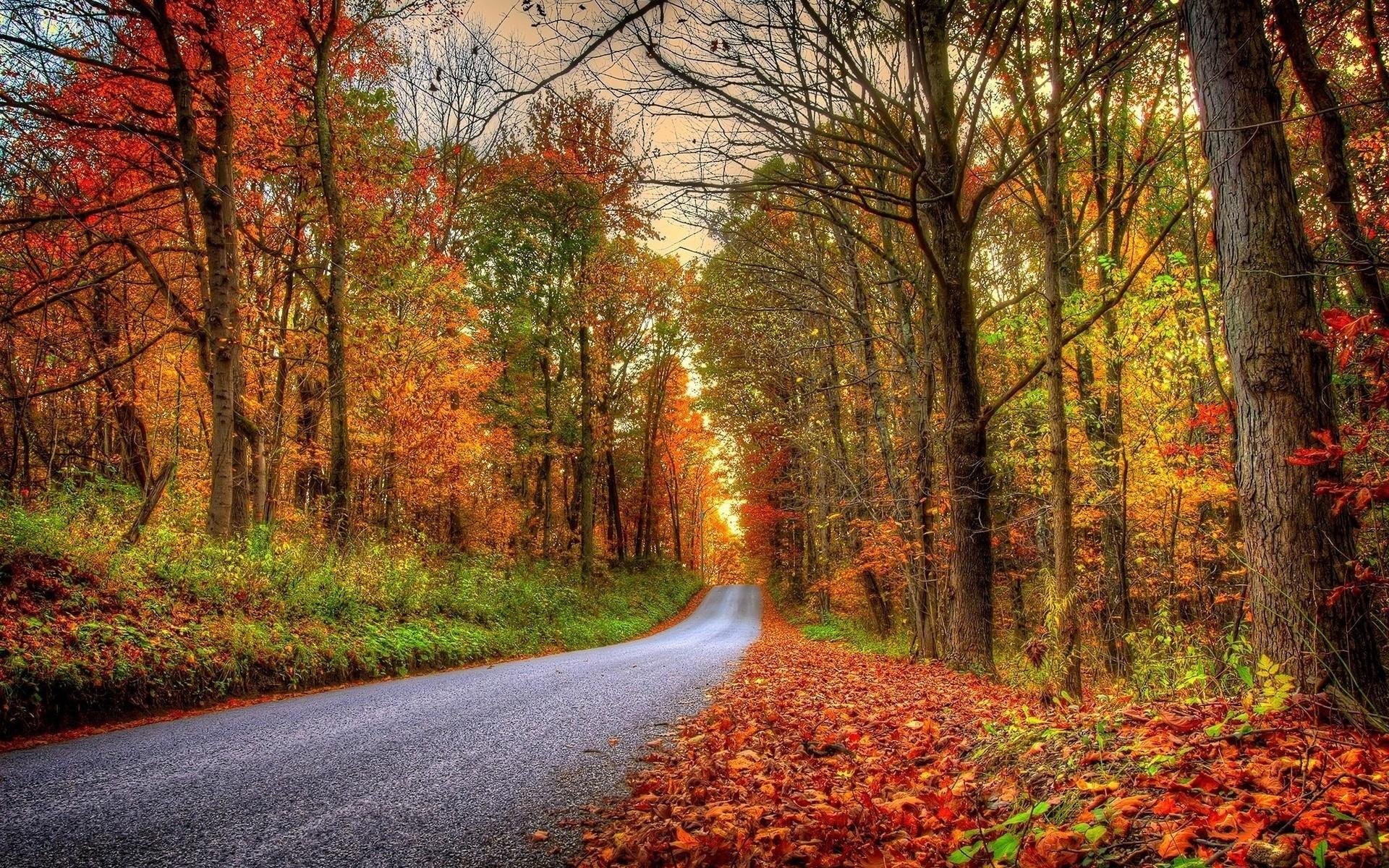 Красивые картинка про осень