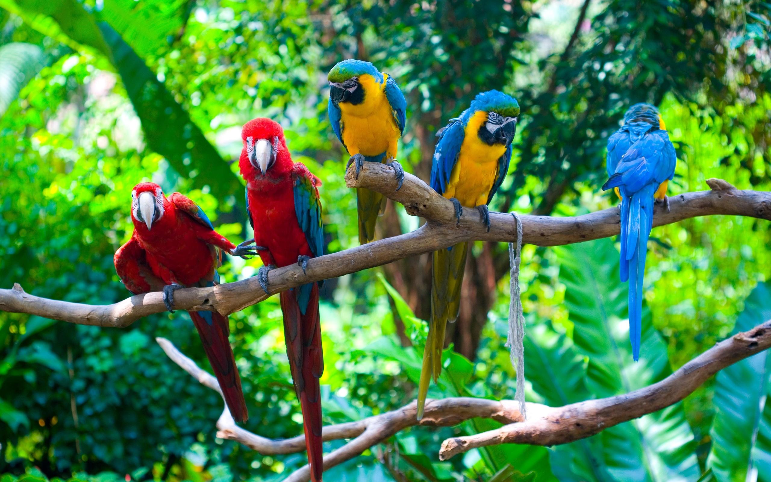 даже большие картинки птички фото осуществляется вашего