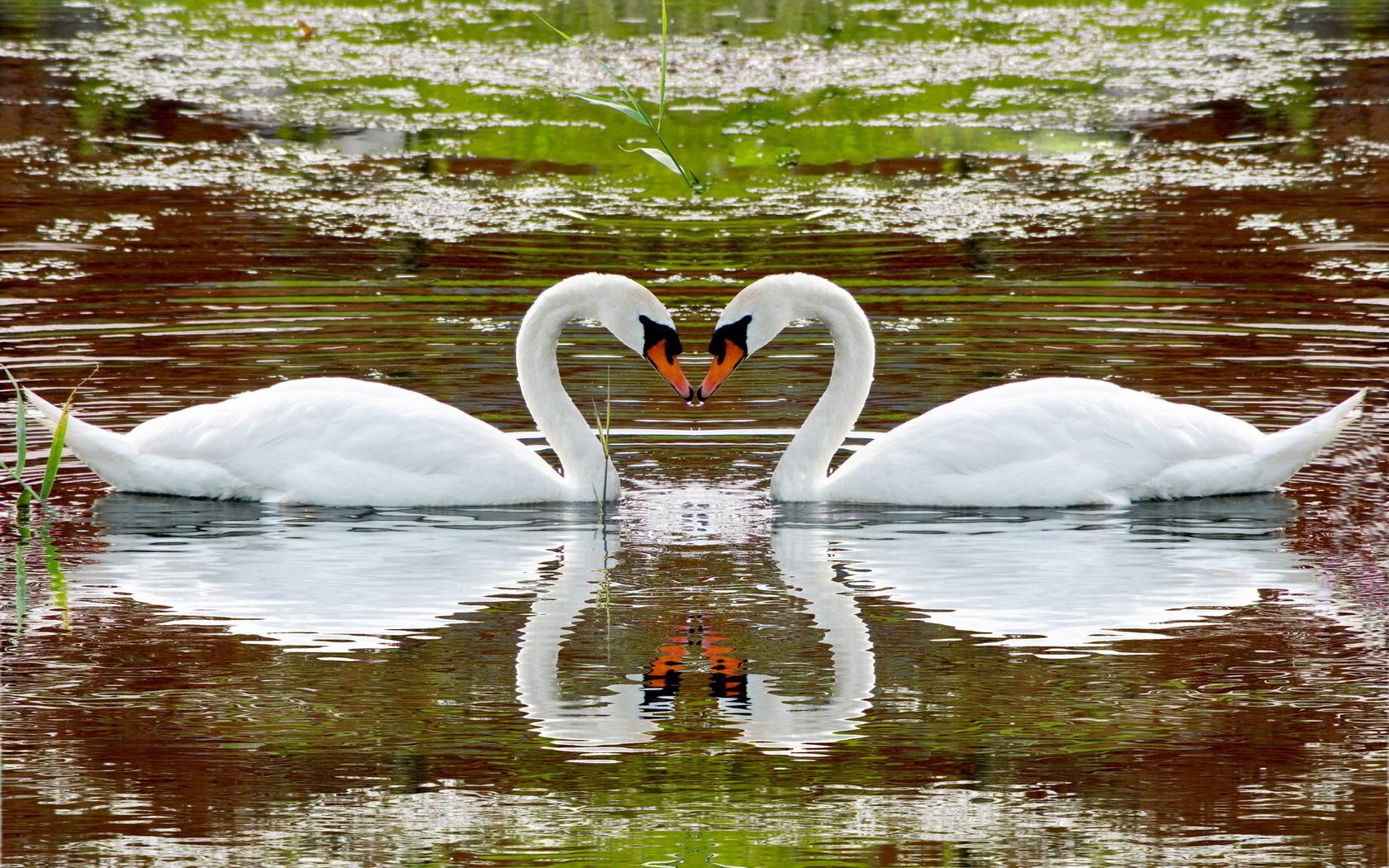 Картинки блестяшек лебедей