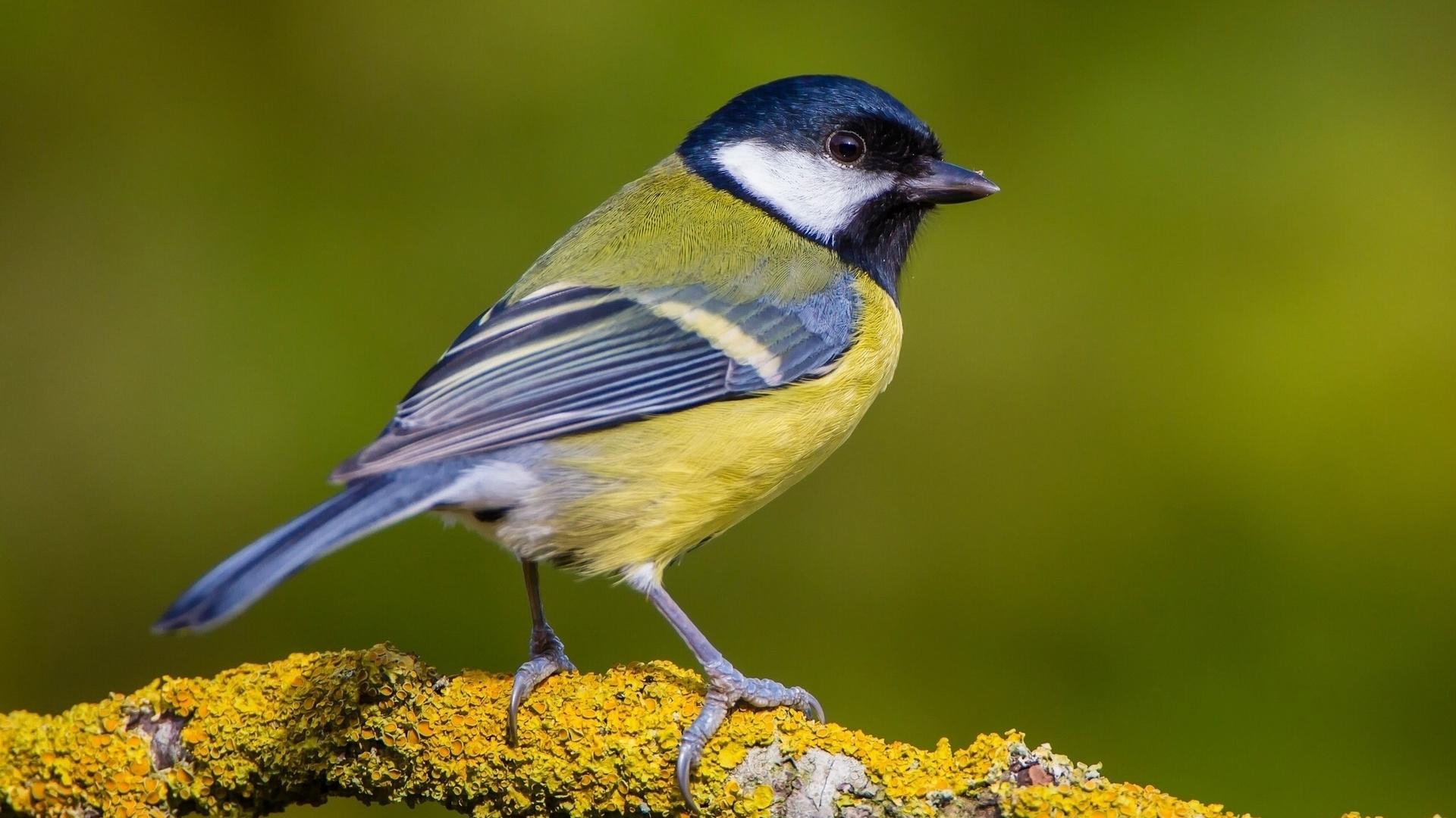 сборная изображение птиц картинки хорошо, если