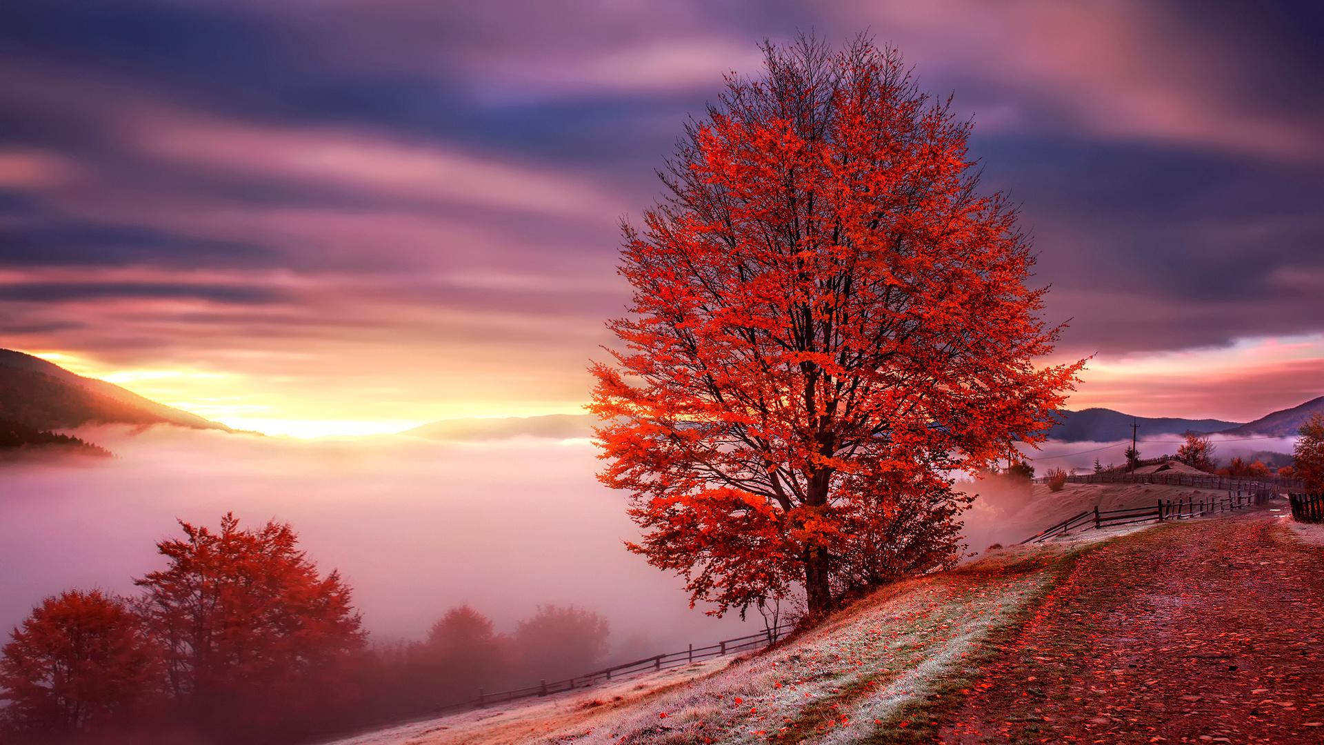 Фото красивый осенний рассвет