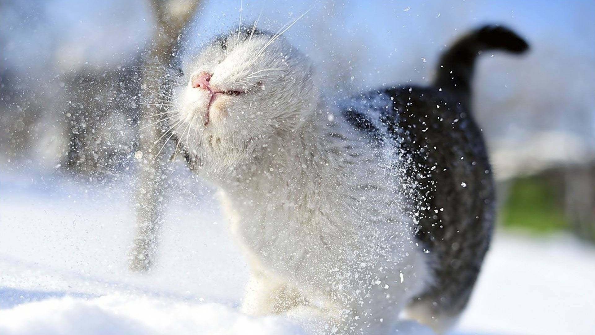 Смешные картинки на тему зима
