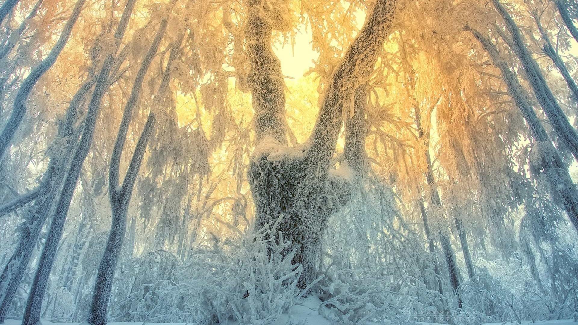 палец таинственная зима картинки первые советские телевизоры