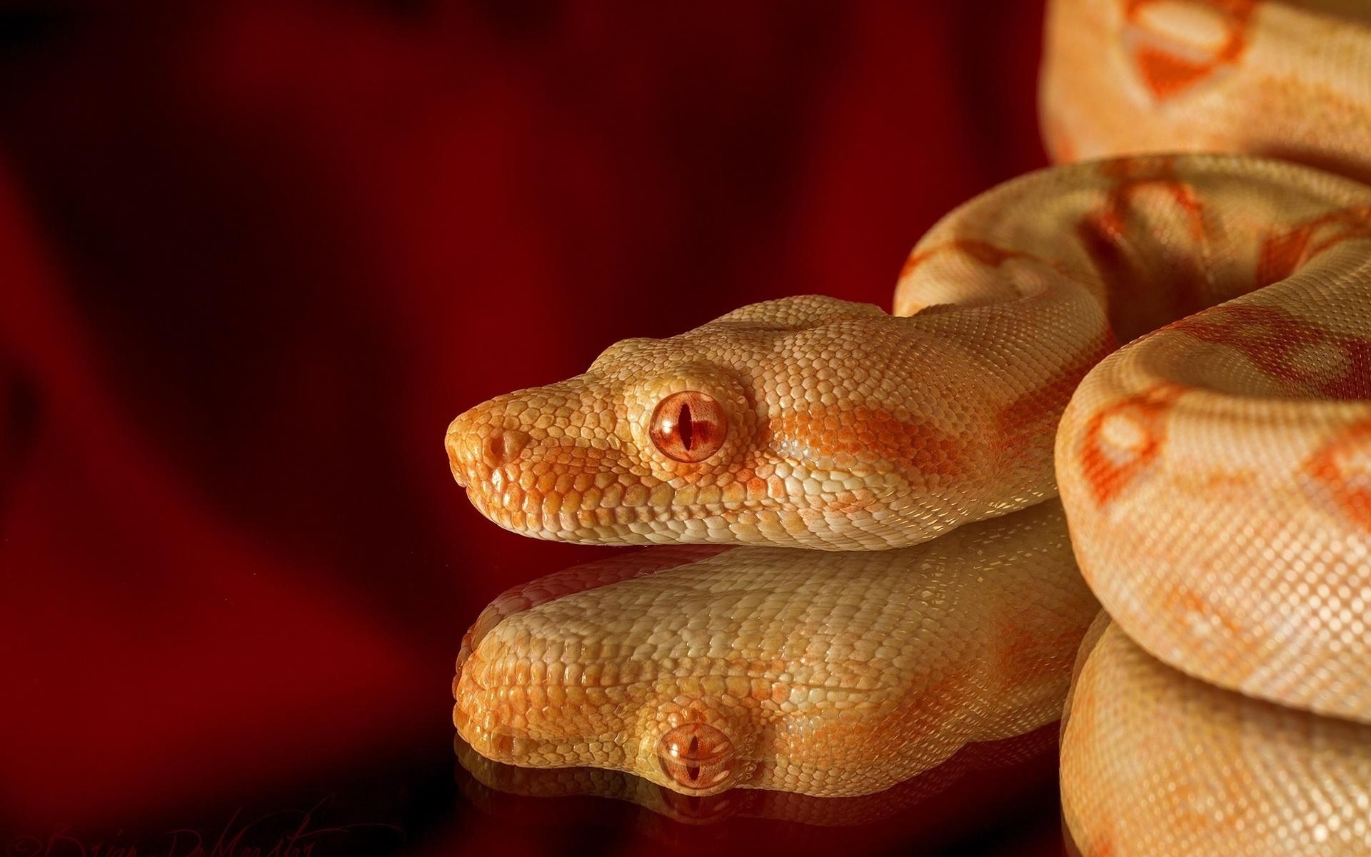 картинки змей с деньгами репертуаре