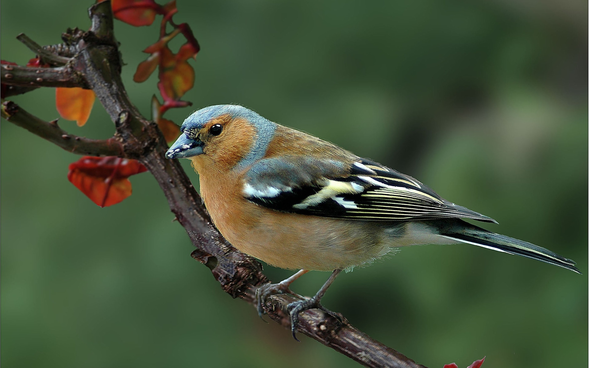 сожалению, изображение птиц на фото картинках раньше нее делали