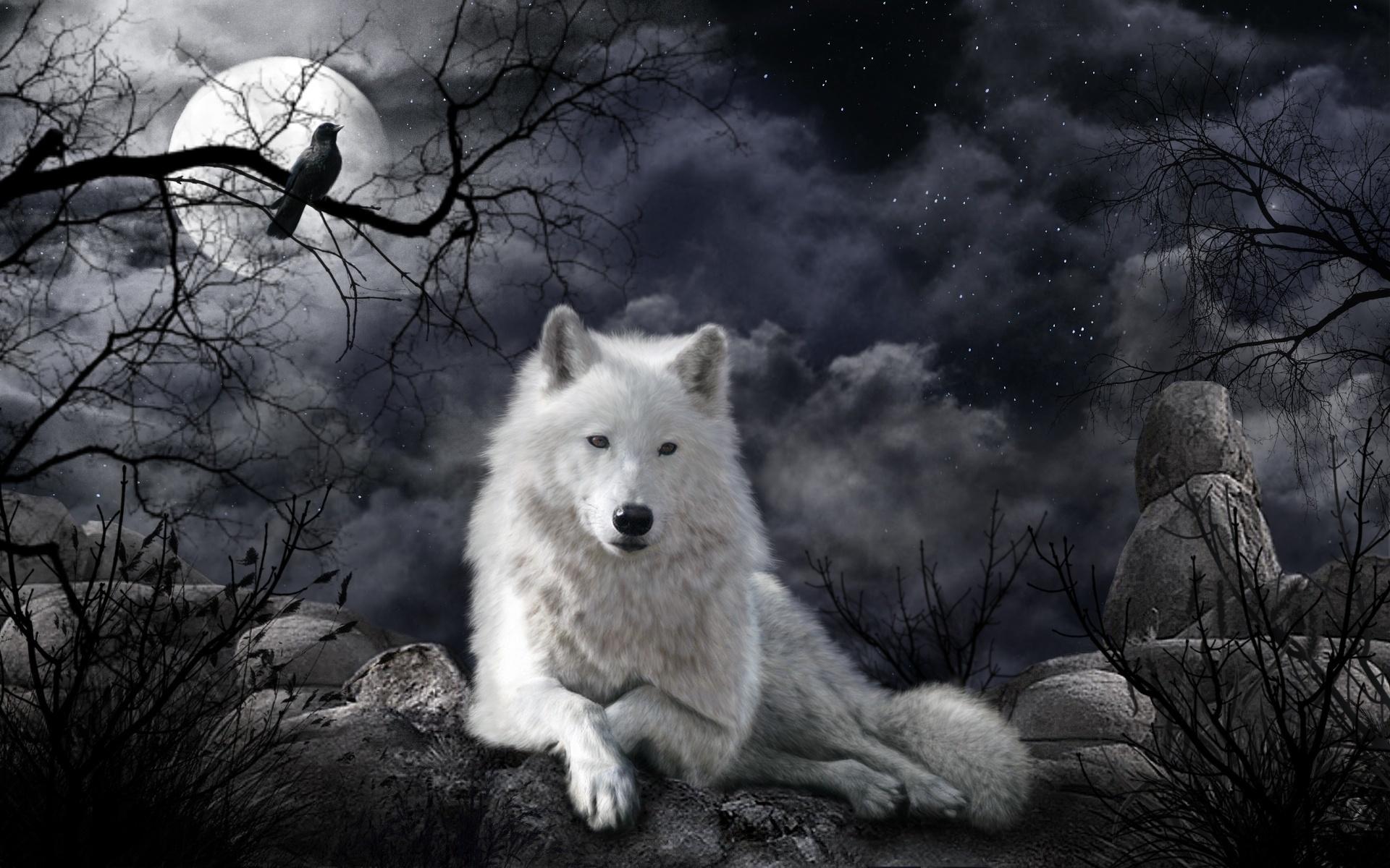картинки белых волков ночью пустыня картинки