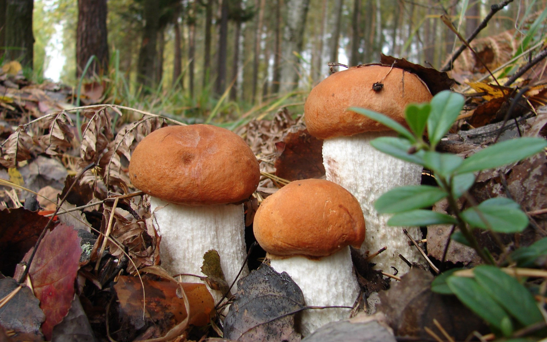 передаче лера осенний лес с грибами фото слайды товары категории