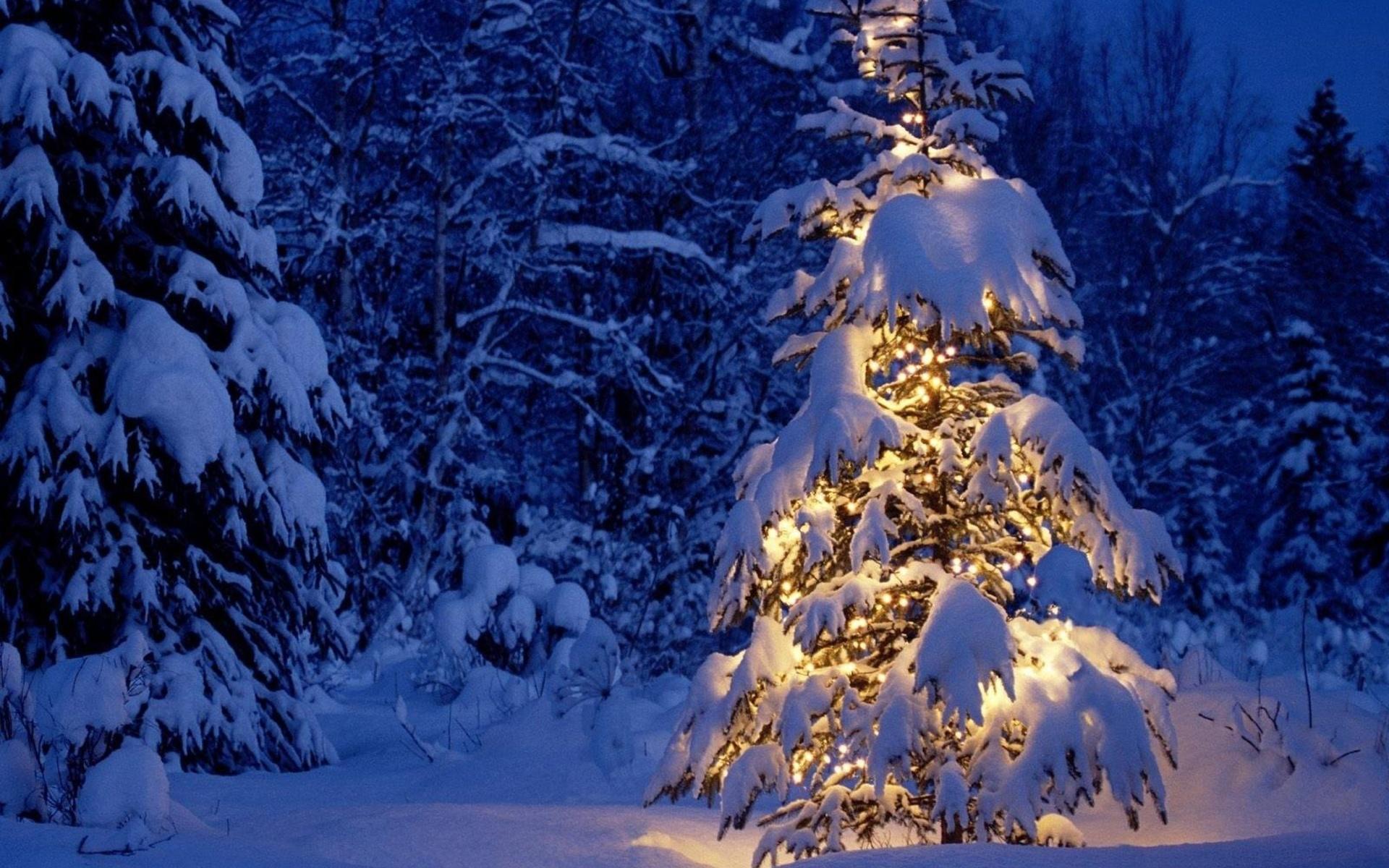 сидеть диване фото новогодней ночи в природе машин, супер