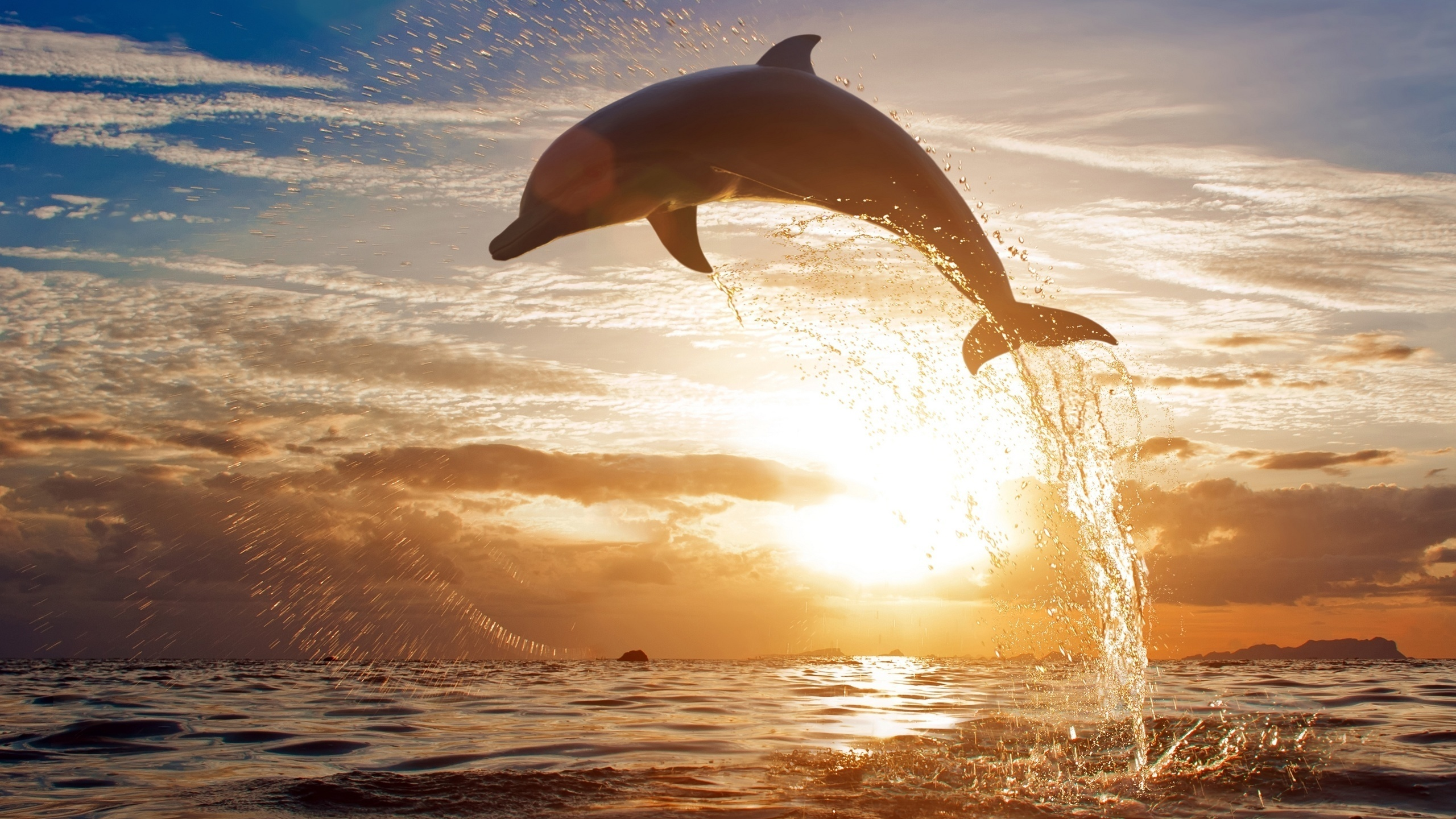 картинки дельфины море солнце здесь то