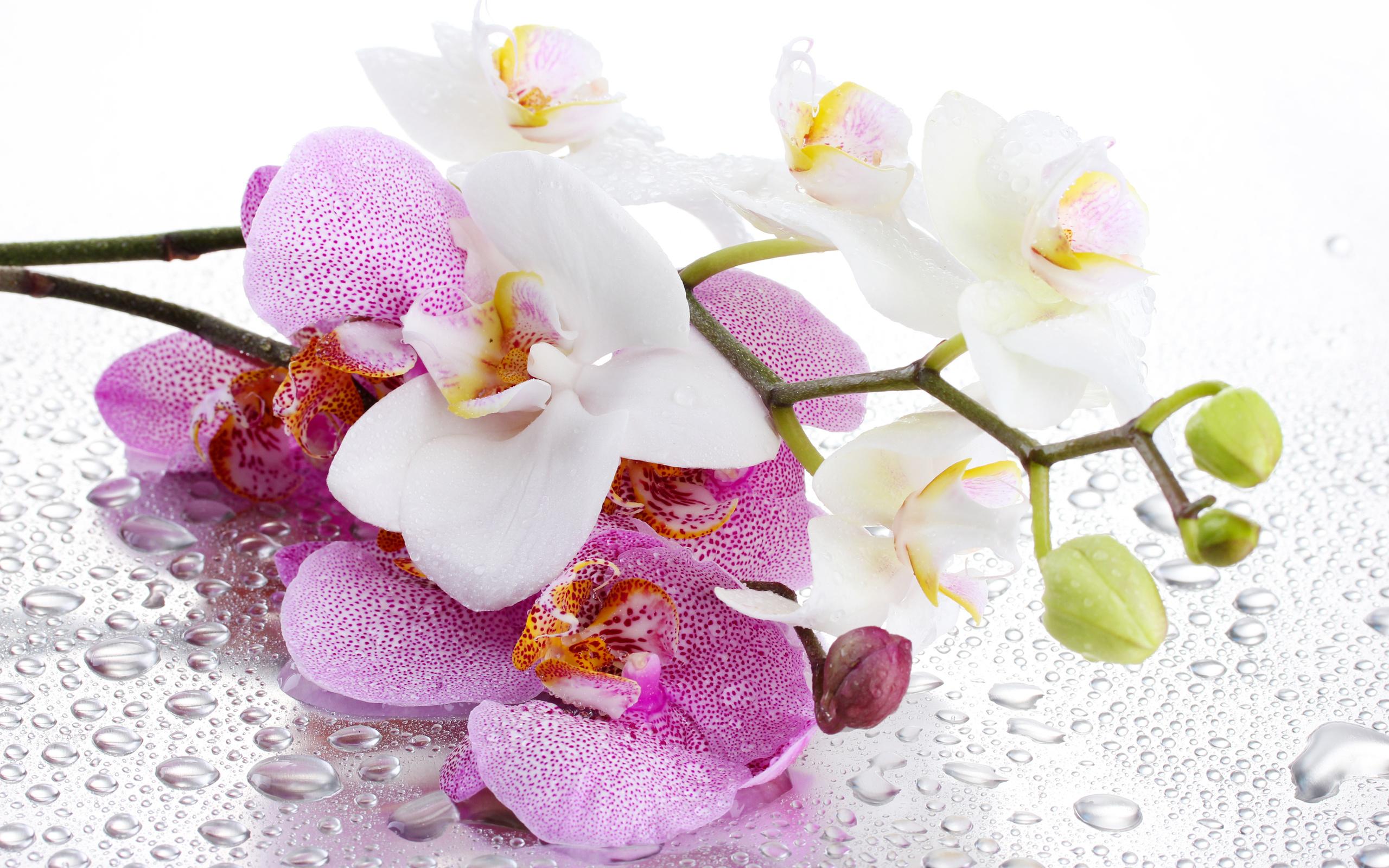 Красивая открытка орхидеи, белом