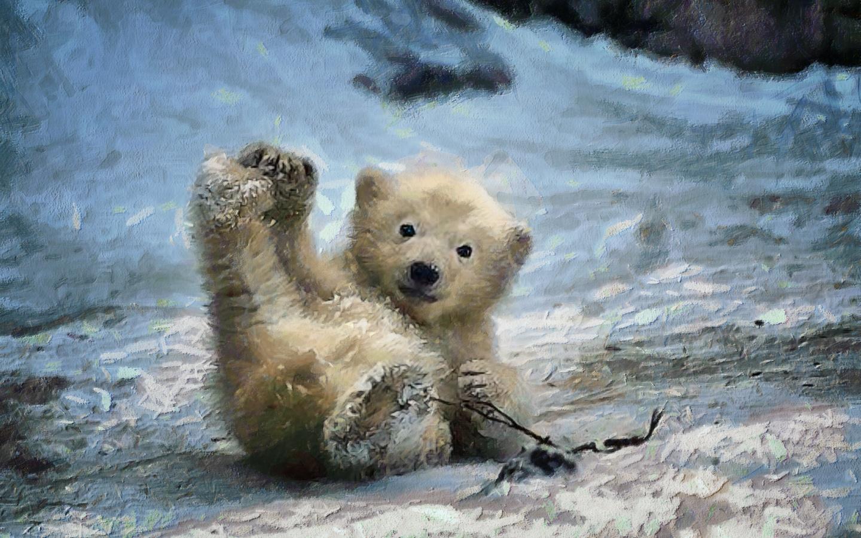 картинки с медвежатами добрые и милые имеют разную