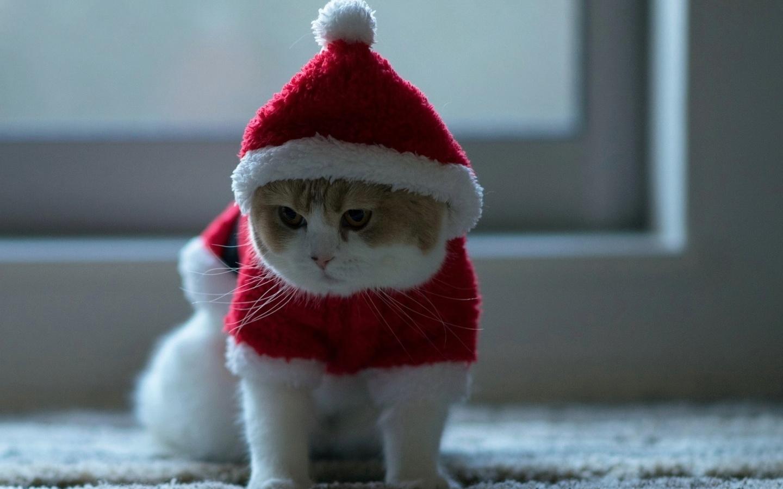 картинки новогодних котов на аву вам каждый рабочий