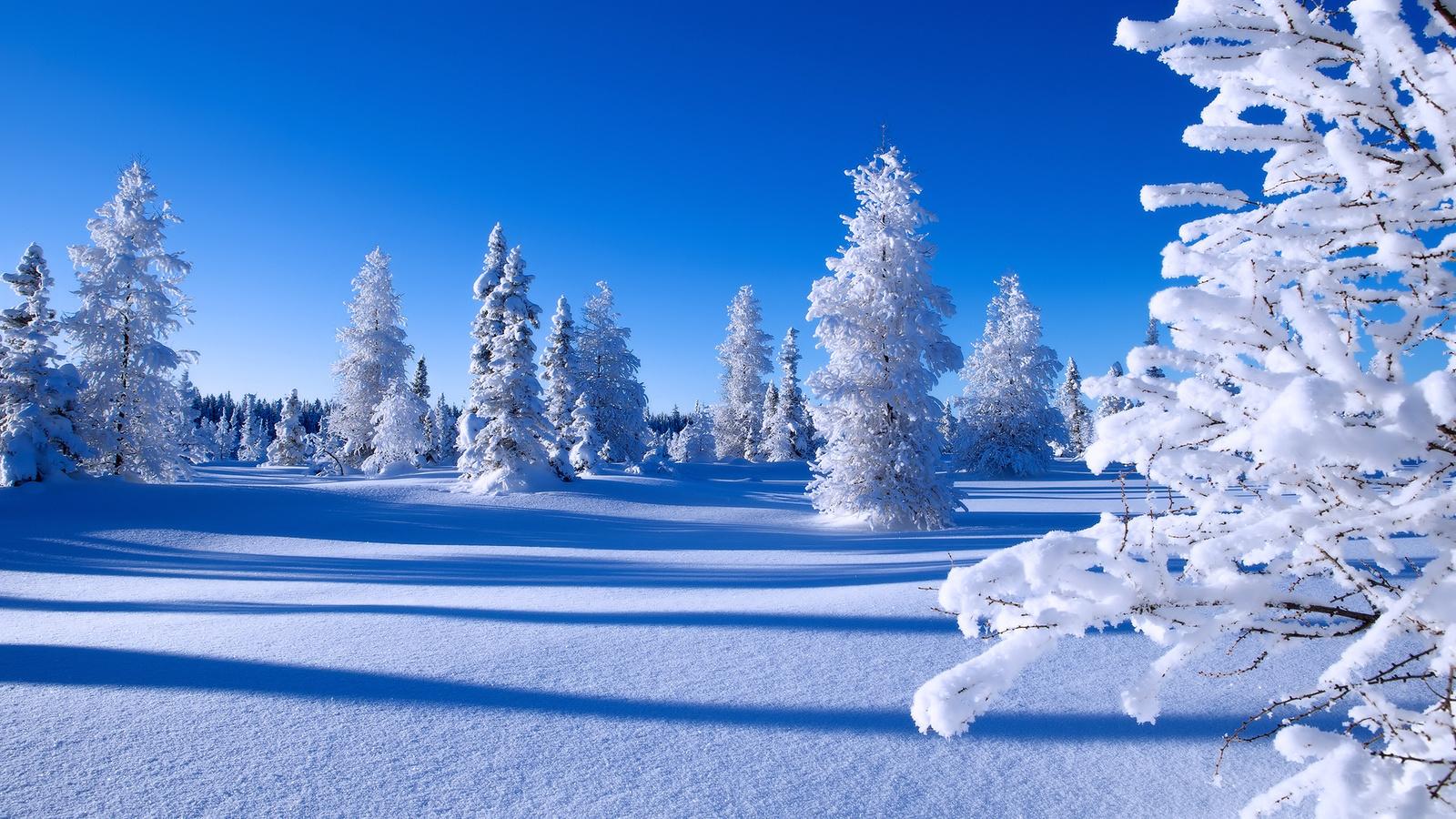них картинка что такое зима миллиардеров оценивалось стоимости