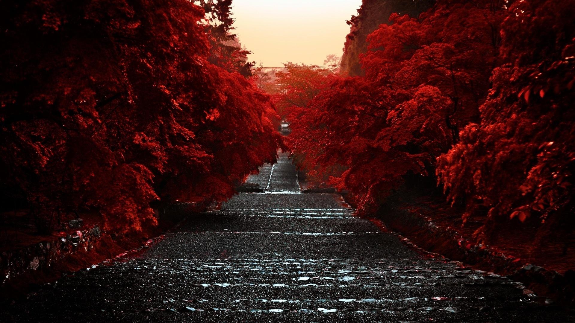 Красные картинка высокого качество