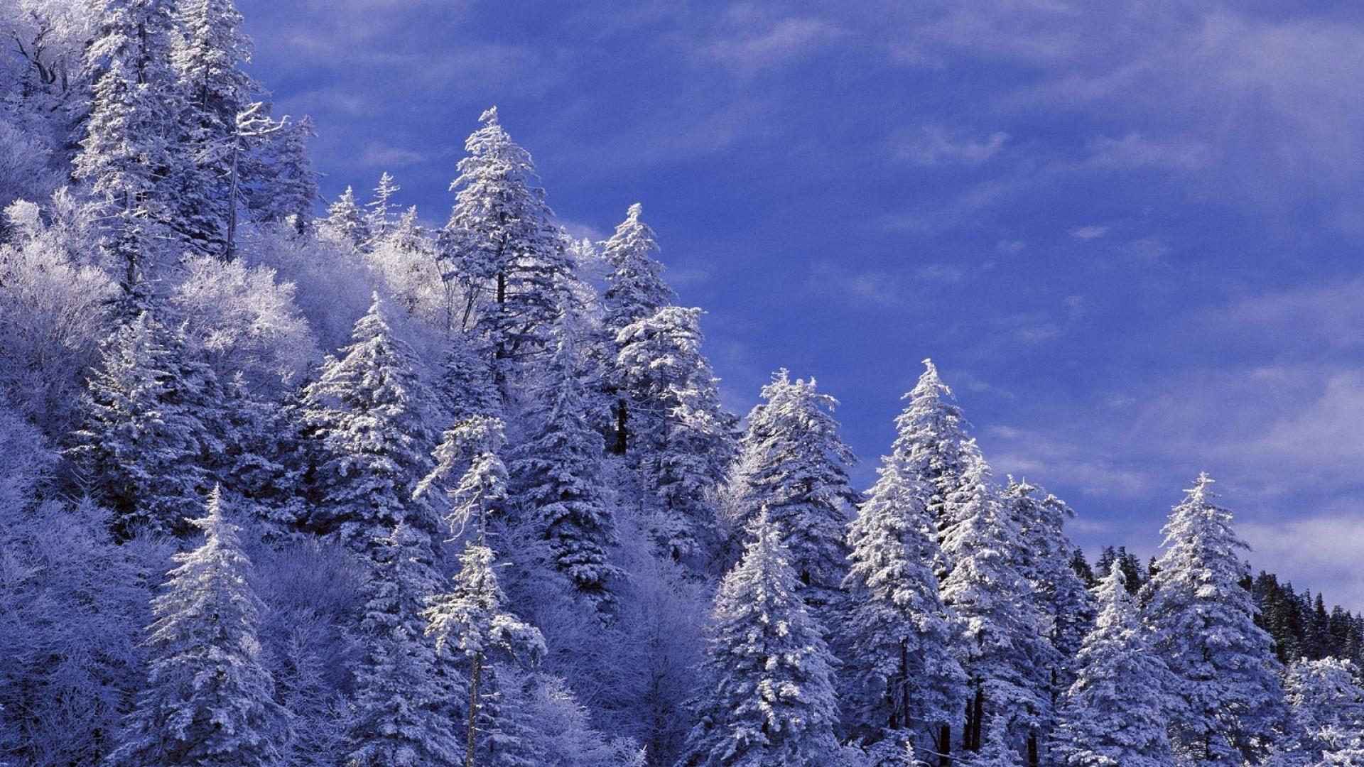 рейтинга зимний лес стихи красивые рептилию
